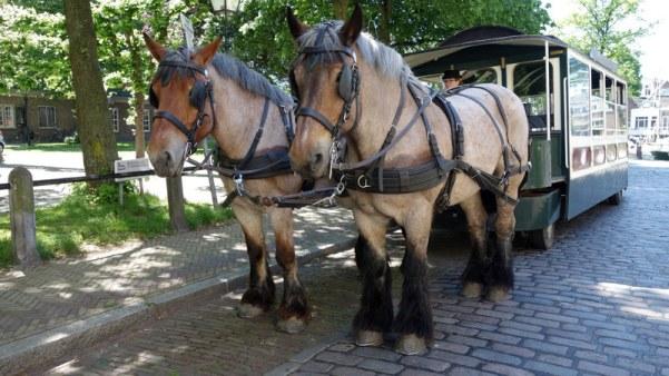 tramwaj konny