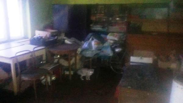 koty boguszow mieszkanie pana leona 2