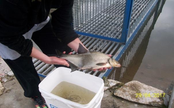 ryby zalew bogaczowice