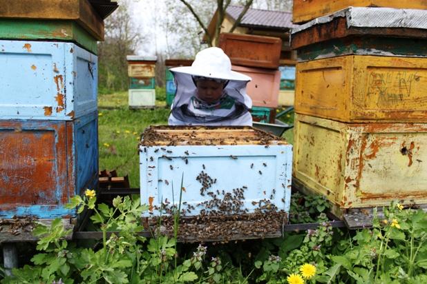 mlodzi pszczelarze